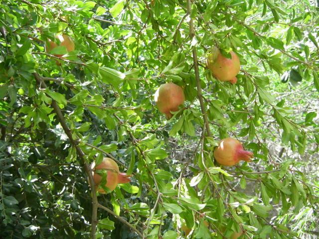 Still ripening